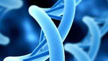 Marin Biologic – Transfection 2